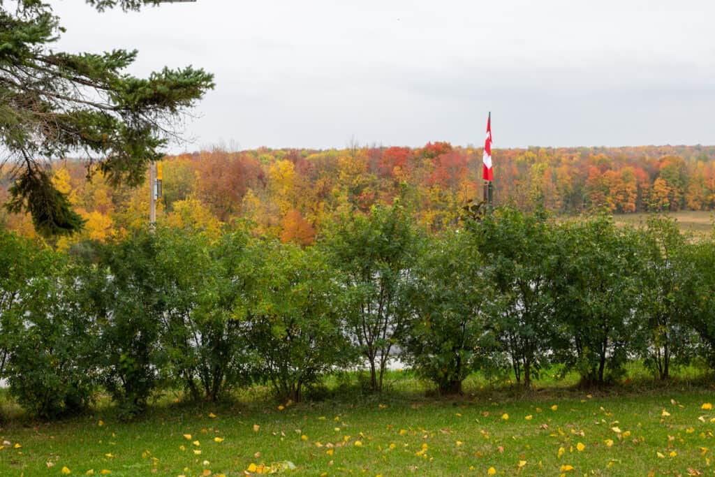 The view from our front porch. A small row of green shrubs is in the foreground. In the background is a Canadian flag and a beautiful landscape of fall foliage of maple trees.